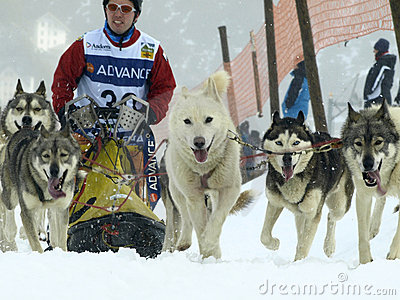 Dogs, sleighs and mushers in Pirena 2012 Editorial Photography