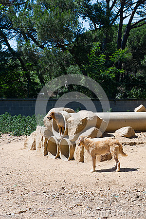 Dogs in Spain
