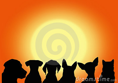 Dogs on the sunset background. vector file
