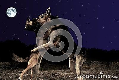 Dogs waltz