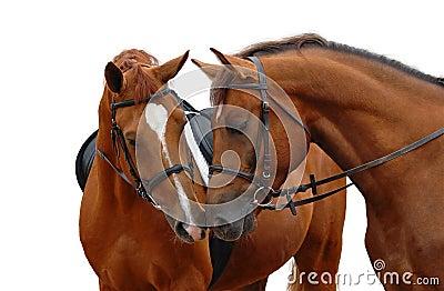 Dois cavalos de louro