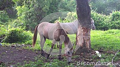 Dois cavalos no campo em Tail?ndia filme
