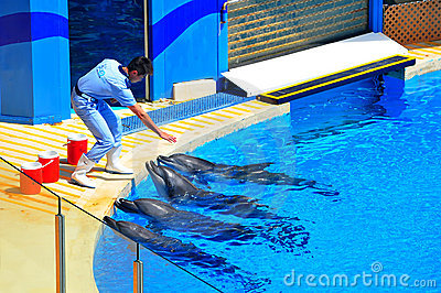 Dolfijnen en de trainer Redactionele Afbeelding