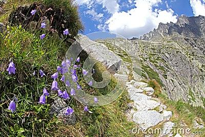 Dolina van Malastudena - vallei in Hoge Tatras, Slowakije