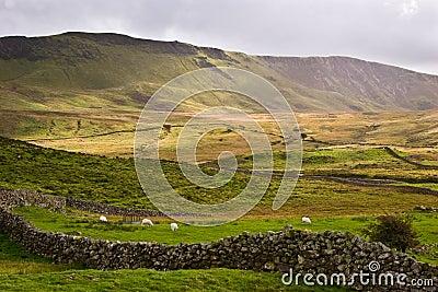 Dolinny Welsh