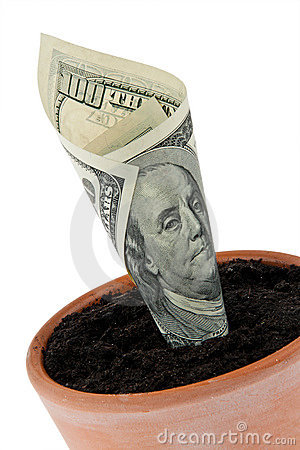 Dollar bill in flower pot. Interest rates, growth.