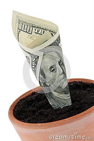 Free Dollar Bill In Flower Pot. Interest Rates, Growth. Stock Photos - 15366703
