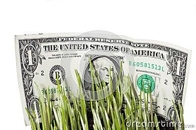 Dollar Bills Stashed In Green Grass