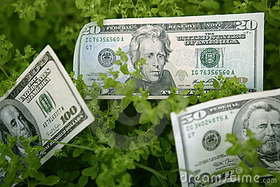 Dollar notes growing from a green plant