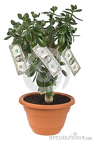 Dollar plant cutout