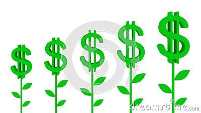 Dollar plants.