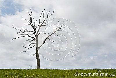 Dolny zachmurzone niebo suchej trawy pojedyncze drzewo