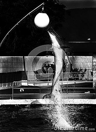 Dolphin #2