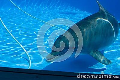 Dolphin - 2