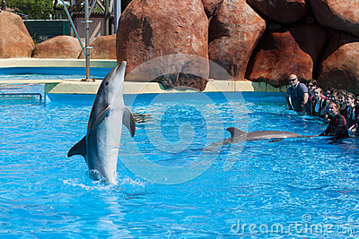 Dolphin Editorial Photography