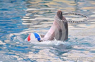 Dolphin artist