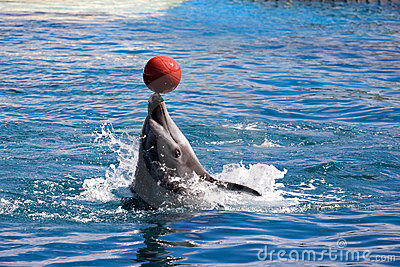 Dolphin balancing ball on nose
