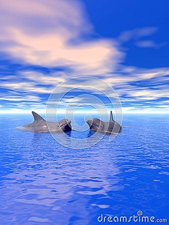 Dolphin_Couple_V