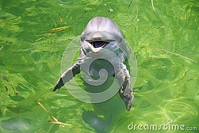 Dolphin in Cuba