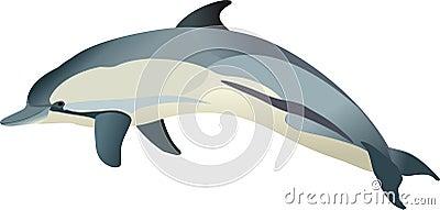 Dolphin Delphinus delphis