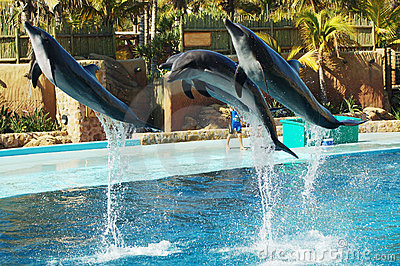 Dolphin flight #2