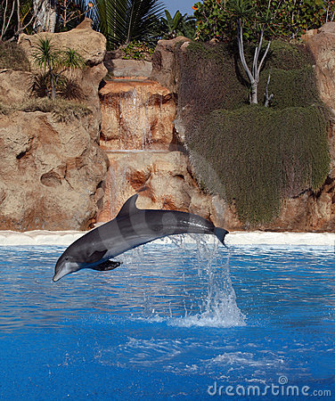Dolphin in front of a cascade