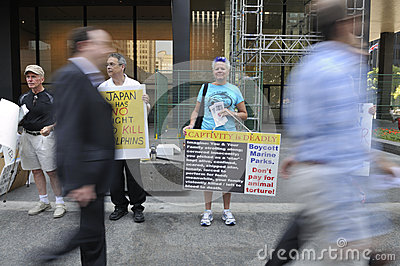 Dolphin hunting protest. Editorial Image