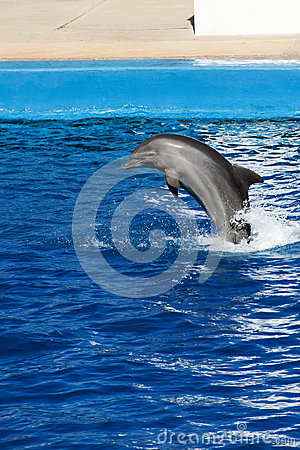 Free Dolphin Jumping Stock Image - 36985241