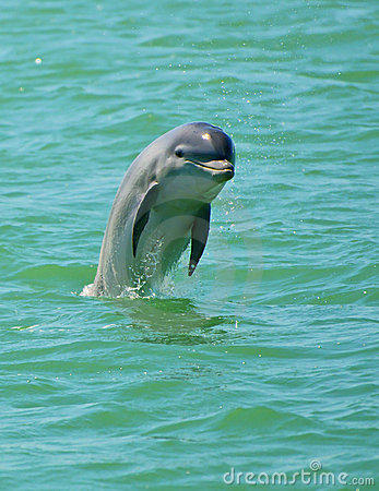 Free Dolphin Jumping, Florida Royalty Free Stock Image - 18733046