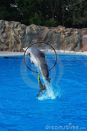 Dolphin jumping through hoop