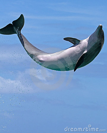 Dolphin Jumping for Joy