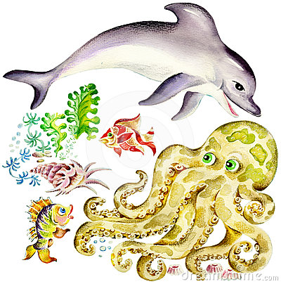 Dolphin and octopus