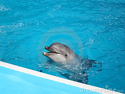 Dolphin in pool