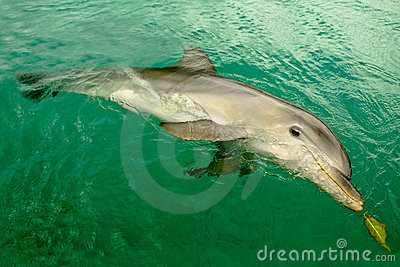 Dolphin from resort