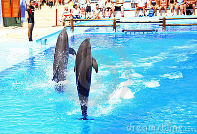 Dolphin show Editorial Photo