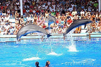 Dolphin show Editorial Stock Photo