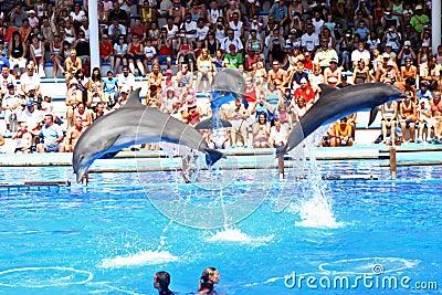 Dolphin show Editorial Stock Photo