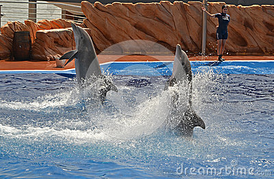 Dolphin show Editorial Image