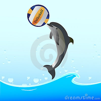 Dolphin Show with ball