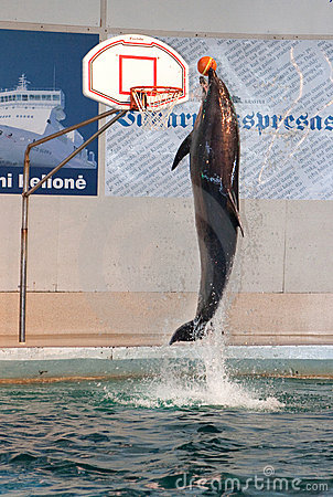 Free Dolphin Show In The Dolphinarium Royalty Free Stock Photos - 13684158