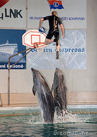 Free Dolphin Show In The Dolphinarium Stock Photo - 13684170