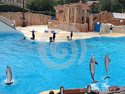 Dolphin show at Parc Asterix, France Editorial Photo