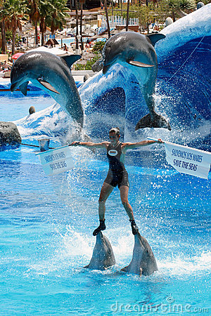 Dolphin Show - Save the seas message Editorial Stock Image