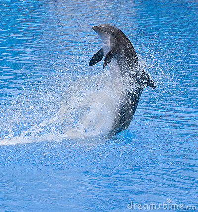 Free Dolphin Splashing Royalty Free Stock Photo - 6879785