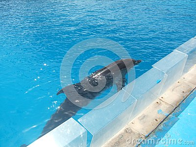 Dolphin In Swimming Pool Royalty Free Stock Image Image 3362056
