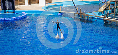 Dolphin with teacher Editorial Stock Image