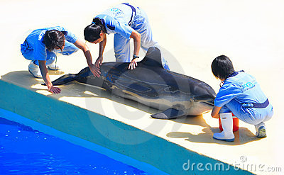 Dolphin & trainers at ocean park hong kong Editorial Photography