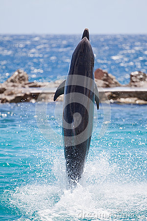 Dolphin walking on water