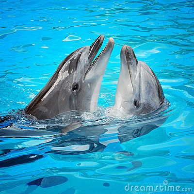 Free Dolphins Royalty Free Stock Image - 11027936