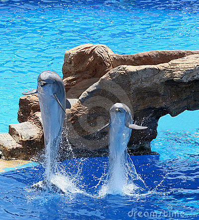 Free Dolphins Royalty Free Stock Photo - 762275